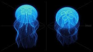 jellyfish texture google search vmm moodboard envir
