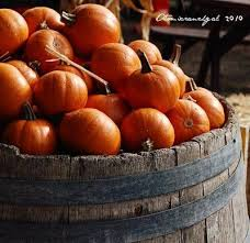 small pumpkins best 25 small pumpkins ideas on pumpkin growing