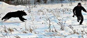 Bears Montana Hunting And Fishing - hunters must expect to see bears montana hunting and fishing