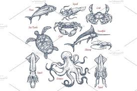 sea animal isolated sketch set of seafood and fish illustrations