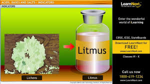 acids bases and salts indicators science class 6 youtube