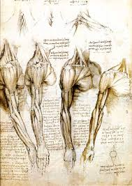 leonardo drawings a study of anatomy from the