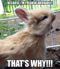 Funny Rabbit Memes - deluxe 20 very funny rabbit meme s and wallpaper site