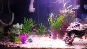 Petsmart Christmas Aquarium Decorations by My 20 Gallon Tank 5 Months After Setup Youtube