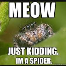 Cute Spider Meme - the misunderstood spider funny pinterest spider memes and humor