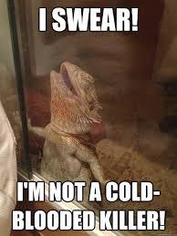 Lizard Meme - innocent lizard memes quickmeme