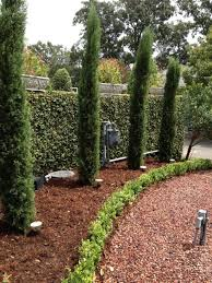 Best  Italian Cypress Trees Ideas On Pinterest Privacy - Italian backyard design