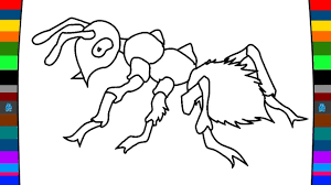 coloring pages how to draw and colour a ant beetle coloring