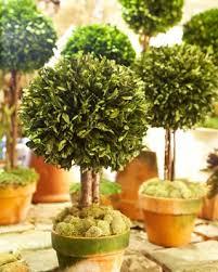 Topiaries Plants - 287 best garden topiary images on pinterest topiaries formal