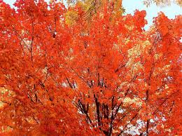fall autumn what s the best classical music to listen to in the fall
