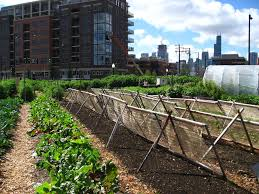 urban farming archives archpaper com archpaper com