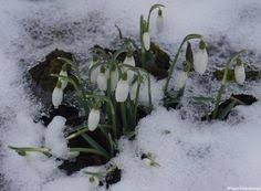Winter Garden Jobs - in pictures beautiful gardens in winter