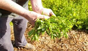 edible native australian plants plants for sale rhyll trout u0026 bush tucker farm