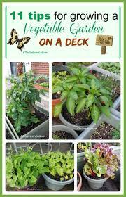 vegetables garden dunneiv org