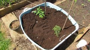 Best Soil For Vegetable Garden In Raised Bed by Best Soil Mixture For Vegetable Garden Room Design Decor