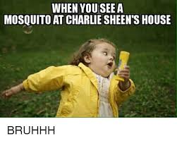 Charlie Sheen Memes - when youseea mosquito at charlie sheen s house bruhhh charlie meme