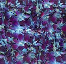 blue dendrobium orchids buy dyed bom blue dendrobium petals