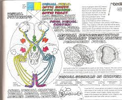 sweet ideas physiology coloring book the anatomy 224 coloring page