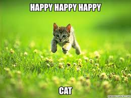 Happy Kitten Meme - cat