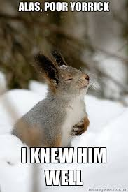 Dramatic Squirrel Meme - overly dramatic squirrel shamelessly copied and made into a meme