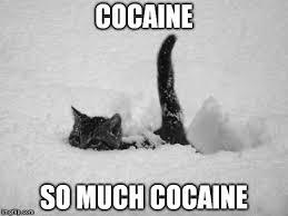 Cat Cocaine Meme - snow cat imgflip
