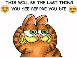 Garfield Memes - 99 best garfield memes images on pinterest garfield pictures