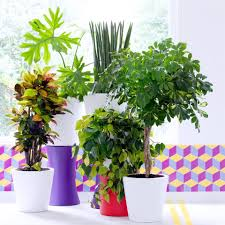 commitment free plants june 2017