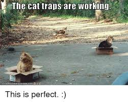 Cat Trap Meme - 25 best memes about cat traps are working cat traps are