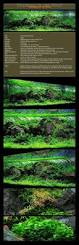 134 best aquascaping awesomeness images on pinterest aquascaping
