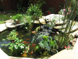 cool pond plants gorgeous this would look awesome in the back
