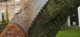 3 essential pruning tools every fruit gardener needs