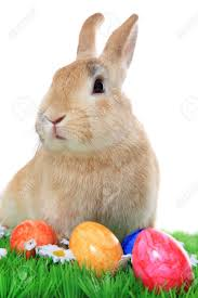cute easter bunny with eggs u2013 happy easter 2017