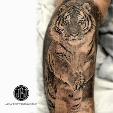 tiger by jose perez jr best ideas gallery