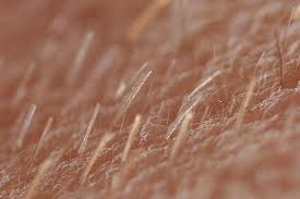 growing out pubic hair 8 strange facts about body hair you probably didn t know
