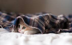 3 things to do before leaving your kitten alone