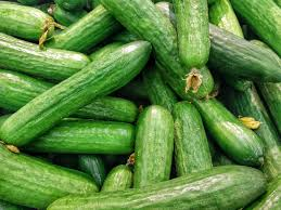 How To Grow Cucumbers On A Trellis Cucumbers Planting Growing And Harvesting Cucumber Plants The