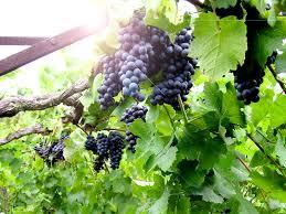 Virginia Winery Map by Chrysalis Vineyards Virginia Is For Lovers