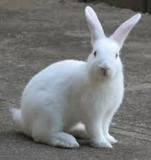 rabbit bunny how to draw a realistic bunny rabbit