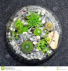 table top plant decorative garden stock photo image 69743772