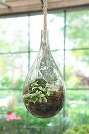 a hanging terrarium reconnect your home with nature
