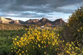 arizona flowers arizona flowers mountains landscapes pixoto