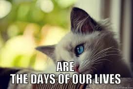 Days Of Our Lives Meme - first world problems cat memes quickmeme