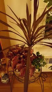 house plants gardendaze page 7