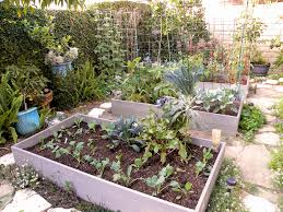 Design My Backyard Raised Beds For Growing Vegetables Harvest Monday And Fall