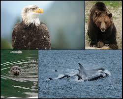 Alaska wildlife images Explore alaska 39 s wildlife with disney cruise line disney parks blog jpg