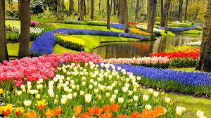 Tulip Field Keukenhof Gardens And Tulip Fields Tour From Amsterdam Youtube