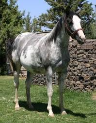 mustang adoption what a beautiful mustang mare for adoption out iin wyoming