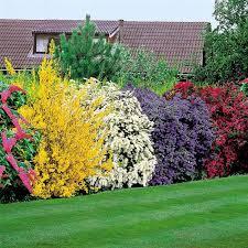 Garden Shrubs Ideas Sweet Looking Garden Bushes Best 25 And Shrubs Ideas On Pinterest