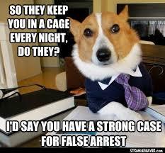 Corgi Lawyer Meme - lawyer dog meme strange beaver