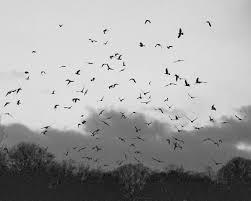 download black wallpaper with birds gallery